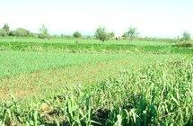 إستثمارات زراعية خليجية بالمغرب